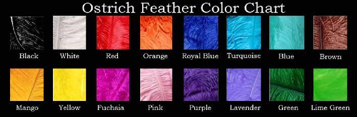 708_ostrich-color-chart